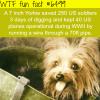 tiny yorkie wtf fun facts