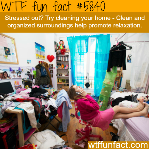 Tips to release stress - WTF fun facts