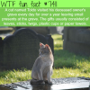 toldo the cat visited its deceased owners grave