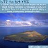 tomato plant found on volcanic island surtsey