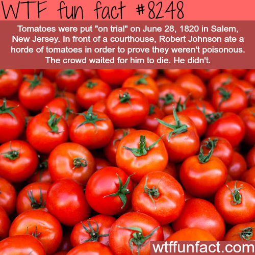 "Tomatoes put ""on trial""  - WTF fun facts"