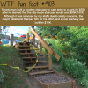toronto man built a staircase for 550 after the