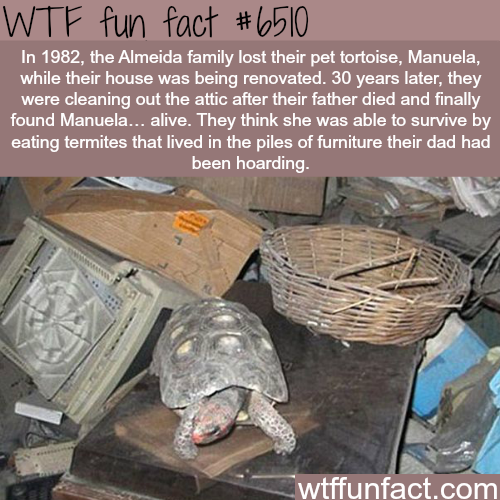 Tortoise survived 30 years in a locked room - WTF fun facts
