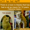 town in alaska that has a cat as a mayor wtf fun