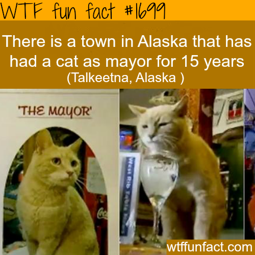 Town in Alaska that has a cat as a mayor -WTF fun facts