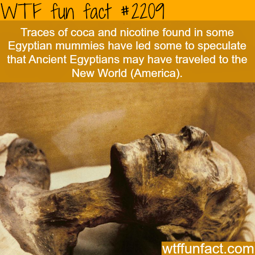 Traces of coca and nicotine found in Egyptian mummies - WTF fun facts