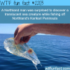 translucent sea creature