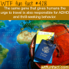 traveling and thrill seeking behavior wtf fun