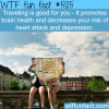 traveling is good for your health wtf fun facts