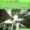 tree talk wtf fun facts