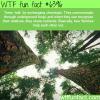 tree talk wtf fun facts