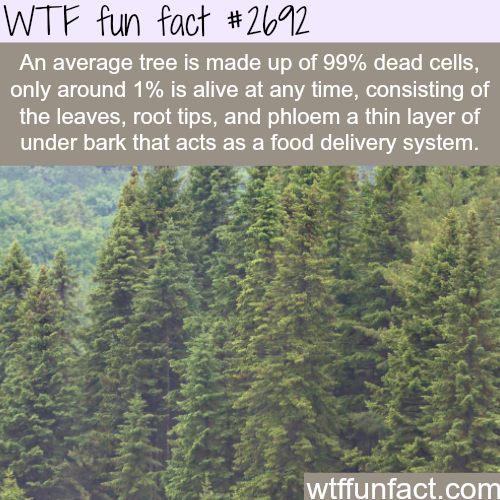 Trees are 99% dead - WTF fun facts