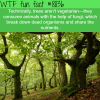trees are not vegetarian wtf fun facts