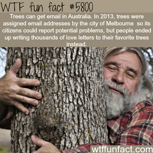 Trees can get an email in Australia - WTF fun facts