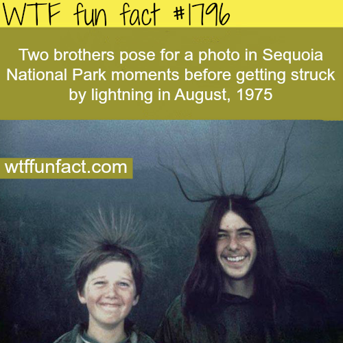 Two brothers pose for a photo in sequoia - WTF fun facts