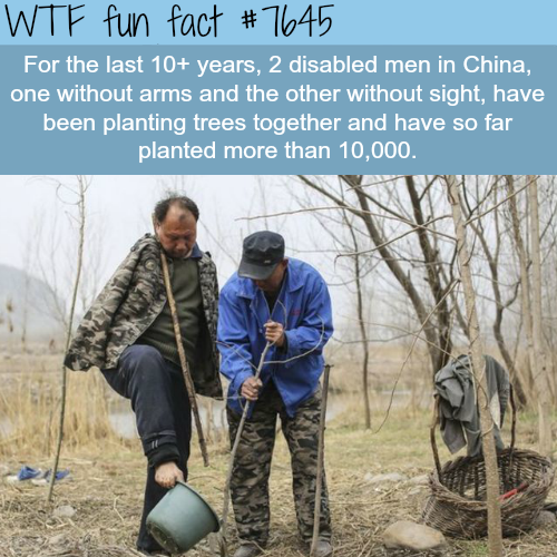 Two disabled men from China planted more than 10