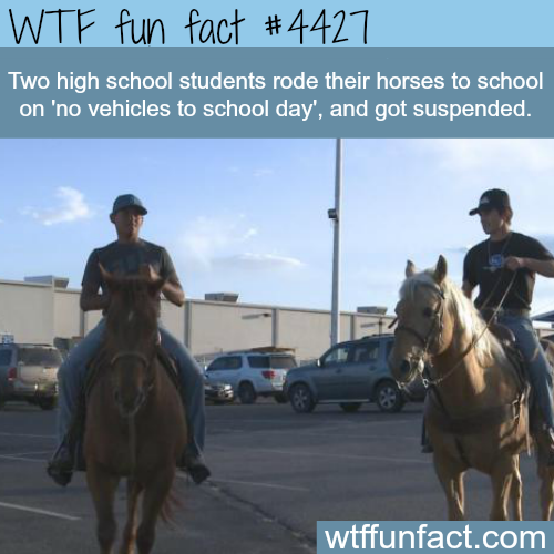 Two high school students get suspended for riding horses -   WTF fun facts
