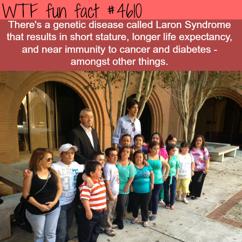 Type of Dwarfism help protect against cancer - WTF fun facts