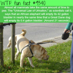 universal law of urination wtf fun facts