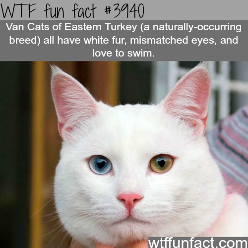 Van Cats - WTF fun facts