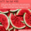 watermelons were green and bitter wtf fun facts