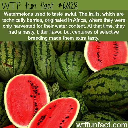 Watermelons - WTF fun fact
