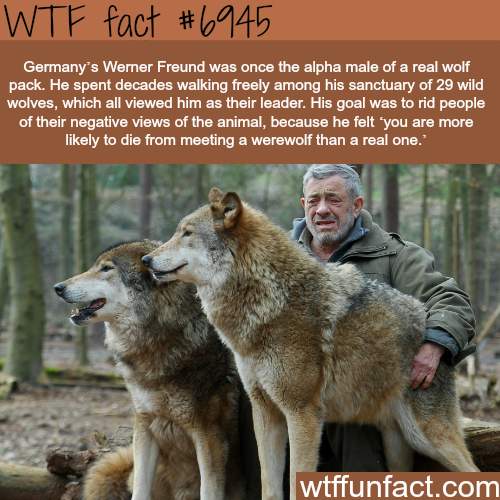 Werner Freund - WTF fun fact
