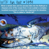 whale fall wtf fun facts