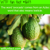 what does avocado mean wtf fun facts