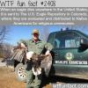 what happen when an eagle dies