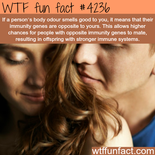 What the body odor can tell you about the immune system -  WTF fun facts