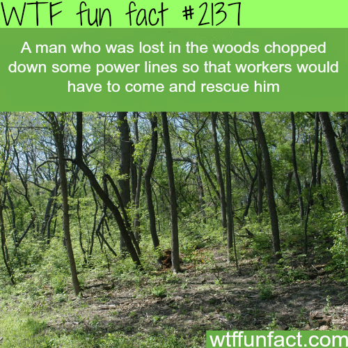 What to do when you're lost in the woods -WTF fun facts