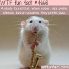 what type of music do rats prefer wtf fun facts