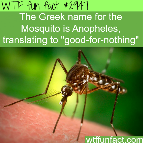 Whats the purpose of the mosquito -  WTF fun facts