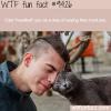 when cats headbutt you wtf fun fact