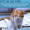 when cats look at you and blind slowly wtf fun