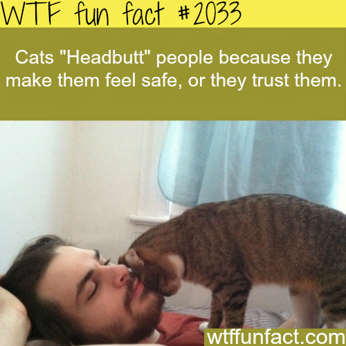 "Why Cats ""Headbutt"" people - WTF fun facts"