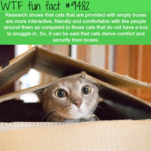 Why cats need boxes - WTF fun fact
