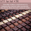why chocolate can be addictive wtf fun fact
