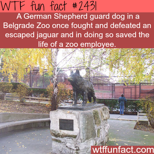 Why dogs are man's best friend? - WTF fun facts