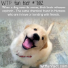 why dogs get happy to when they see their owner