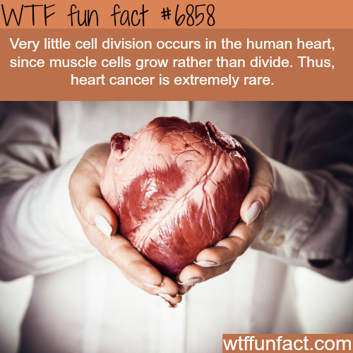 Why heart cancers are so rare - WTF fun fact