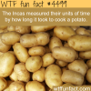 why potatoes are very important in history wtf