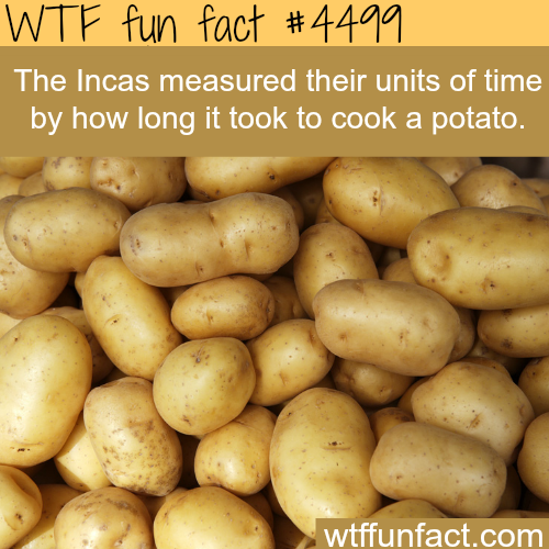 Why potatoes are very important in history -   WTF fun facts