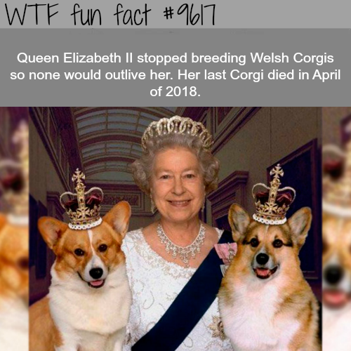 Why Queen Elizabeth stopped breeding Corgis - WTF fun fact