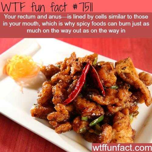 Why spicy food burn on the way out.. - WTF FUN FACTS