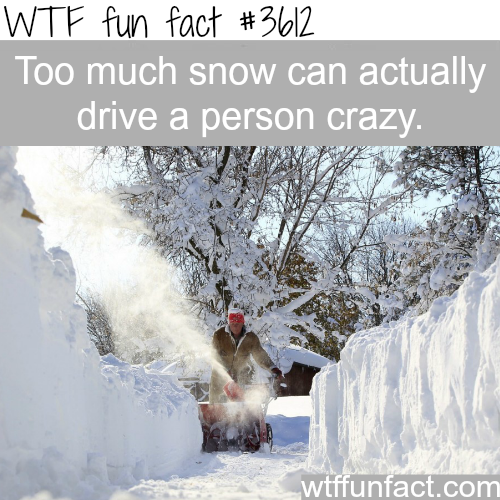 Why too much snow is bad for you -  WTF fun facts