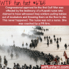 why war is bullshit wtf fun fact