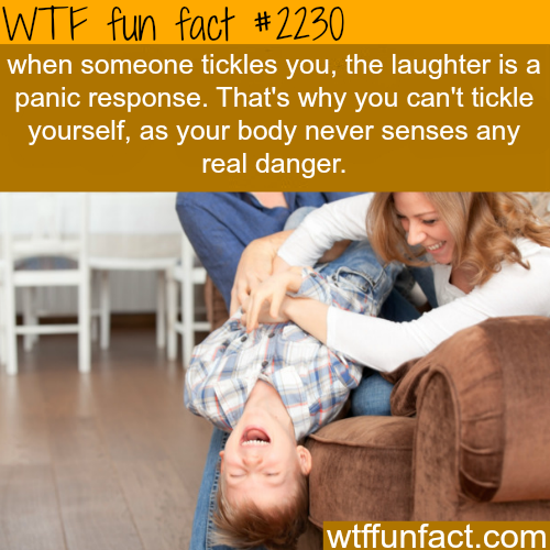Why you can't tickle yourself - WTF fun facts