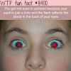 why you get red eyes in pictures wtf fun facts